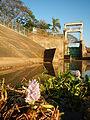 09645jfAngat River Dam Bay Eichhornia crassipes San Rafael Bustos Angat Bulacan villagesfvf 04.JPG
