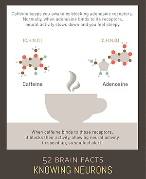 Adenosine receptor - Caffeine keeps you awake by blocking adenosine receptors.