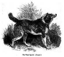 A drawing of a furry dark dog facing to the right. Its legs and belly are white, and it holds its front left paw in the air.