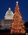 2005 U.S. Capitol Christmas Tree (31805203985).jpg