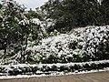 2010年12月15日夜里的那场雪 - panoramio (11).jpg