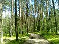 2010 05 10 - panoramio (2).jpg