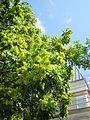 20120815Goetterbaum Messplatz Hockenmheim4.jpg