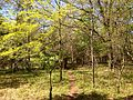 2013-05-05 10 21 43 View west along an unnamed trail adjacent to the Orange Trail in the Rutgers Ecological Preserve.JPG