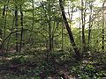2013-05-06 18 42 48 View downhill from the Orange Trail at a spring in Point Mountain Reservation.jpg