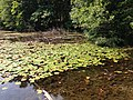 2013-08-20 14 26 23 The northern portion of Lenape Lake along the Appalachian Trail in the Pennsylvania section of the Delaware Water Gap National Recreation Area.jpg