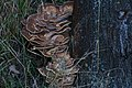 20130924 005 Baarlo Elfenbank (9955853784).jpg