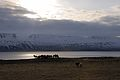 2014-04-29 19-35-33 Iceland - Akureyri Svalbarðseyri.JPG
