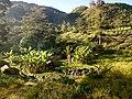 20170905 Papouasie Baliem valley 5.jpg