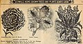 36th annual catalog - what to plant how to plant when to plant (1905) (14595205437).jpg