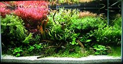 definition of aquarium