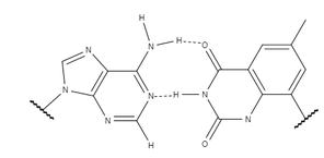 A adenina forma duas ligações de hidrogênio com a timina expandida.