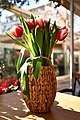 A bouquet of white and red two-tone tulips in a basket.jpg