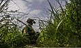 A coalition forces service member uses vegetation as concealment during an operation in the Khost district of Khost province, Afghanistan, Aug. 21, 2013 130821-A-HD451-036.jpg