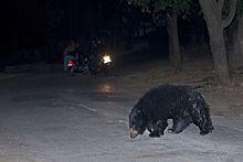 Gujarati speed dating bir-