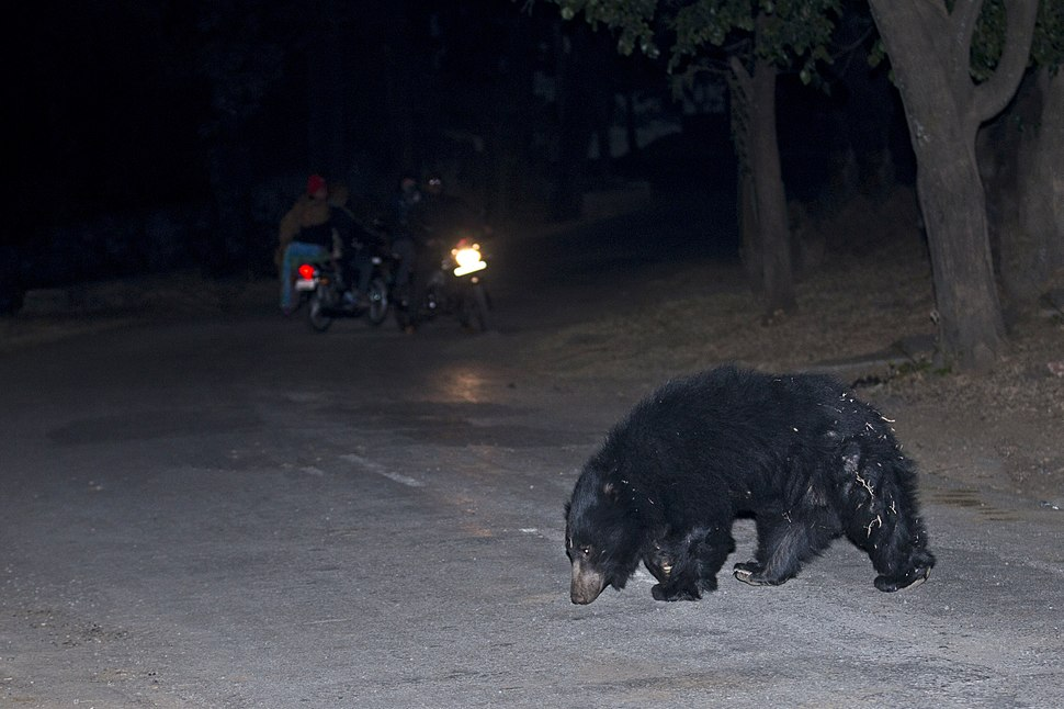 A fragile co-existence of between sloth bears and humans at Ratanmahal Sloth Bear Sactuary, Dahod, Gujarat, India