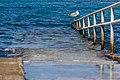 A gull on a handrail, Umag, Istria, Croatia.jpg