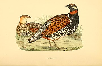 A history of the birds of Europe, not observed in the British Isles (1875) (14729282806).jpg