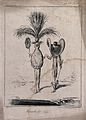 A man and a woman, both wearing enormous hats. Etching by J. Wellcome V0040605.jpg