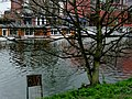 A view through an urban tree on modern houseboats in the Lozingskanaal in Amsterdam-Oost, FotoDutch, april 2013.jpg