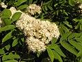 Ab plant 1723.jpg
