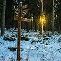 Abendsonne Im Winterwald Hochharz (144797363).jpeg