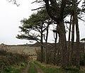 Access road north from Trysglwyn Isaf - geograph.org.uk - 1277934.jpg