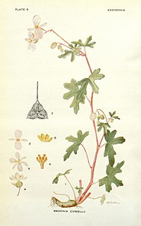 Addisonia (PLATE 005) (8574238475).jpg