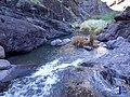Agua corriendo - panoramio.jpg