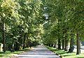Allee noerdlich des Mittelkanals Schlosspark Nymphenburg Muenchen-2.jpg