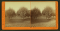 Almond Grove at T.H. Selby's Residence, Fair Oaks, Cal, by Watkins, Carleton E., 1829-1916.png