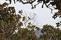 Alto Araguaia - State of Mato Grosso, Brazil - panoramio (1096).jpg