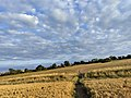 Altocumulus over fields Galley Common 1 August 2021 01.jpg