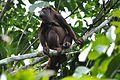 Amazonia 574.jpg