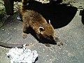 Amigo que encontramos na porta da Floresta.jpg
