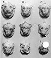 Amulet, lion head MET 23-6-122A-I.jpeg