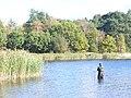 Angler at Frensham Little Pond - geograph.org.uk - 1011080.jpg