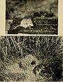 Animal life of the Carlsbad cavern (1928) (18009588408).jpg