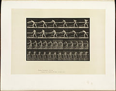 Animal locomotion. Plate 379 (Boston Public Library).jpg
