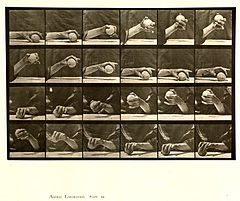 Animal locomotion. Plate 534 (Boston Public Library).jpg