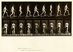 Animal locomotion. Plate 75 (Boston Public Library).jpg