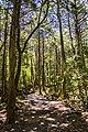 Aokigara forest near wind cave 06.jpg