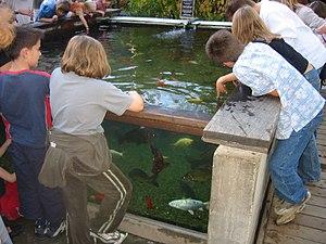 Orange actualit s for Aquarium exterieur
