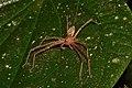 Arachnidae (15700016011).jpg