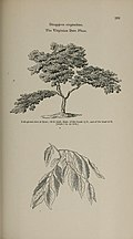 Arboretum et fruticetum britannicum, or - The trees and shrubs of Britain, native and foreign, hardy and half-hardy, pictorially and botanically delineated, and scientifically and popularly described (14597392818).jpg