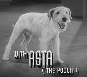 "Skippy (dog) - Skippy portraying ""Asta"" in  After the Thin Man (1936)"