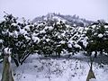 Astara, Şüvi kəndi -3.jpg