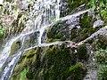 Auga e musgo - panoramio.jpg