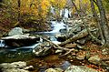 Autumn-clear-water-waterfall-landscape - Virginia - ForestWander.jpg