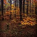Autumn Belgrad Forest 3.jpg